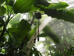 Sunlight in the Rainforest by Amy Millios