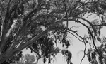 Tree Branches in Black and White by Amy Millios